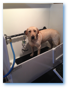 Modern dog boston great for dogs big and small our self service dog washing station is a quick and easy way to groom your dog without the mess of doing it in your own home solutioingenieria Gallery